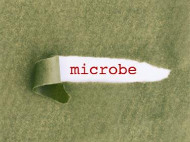 Plus microbr qu'humain